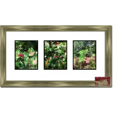 Darby Home Co Fabien Collage Picture Frame DBHM3936